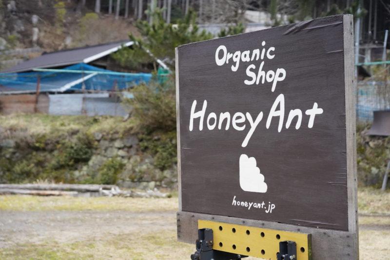Honey Ant